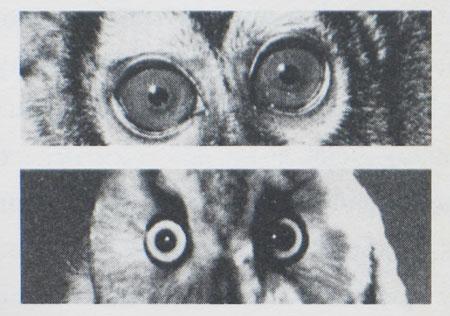 austerlitz-eyes
